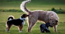 Wurmkur bei Hunden