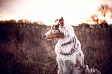Freudentier Hundeleine + Hundehalsband im Set