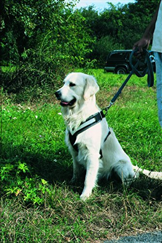 Hunde Sicherheitsgeschirr fürs Auto