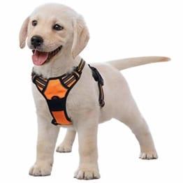 Hundegeschirr für kleine Hunde