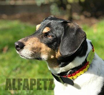 Hundehalsband Premium in Deutschland Farben