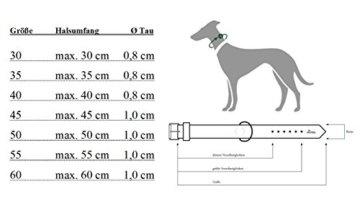 Hunter Dressurhalsung für Hunde in der Farbe Petrol