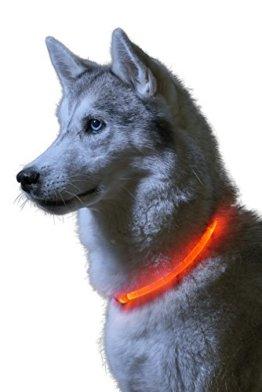 Leuchtendes LED Hundehalsband