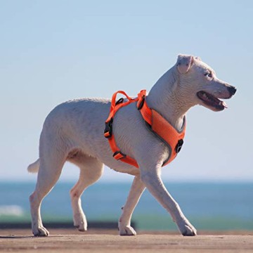 Raffaelo Hunde Laufgeschirre